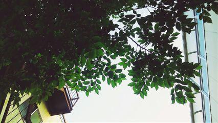 freetoedit life lifestyle leaf green