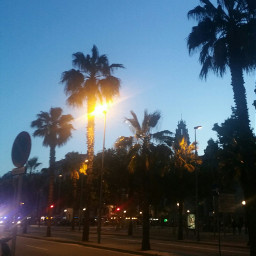wonderfulnight palms citylights walking relaxingday