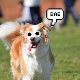 bae googlyeyes love dog freetoedit