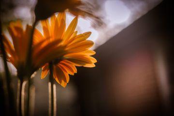 flower artistic