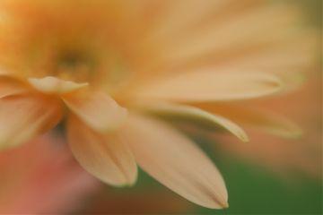 flower bloom blossom dream photo