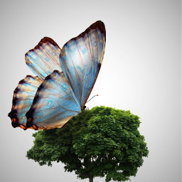 freetoedit edited remixit tree butterfly