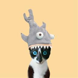 freetoedit hypnoeye hypnotic hypnocat