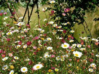 photography nature flowers daisy emotions freetoedit